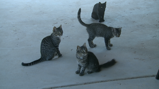 cats for contact7.jpg