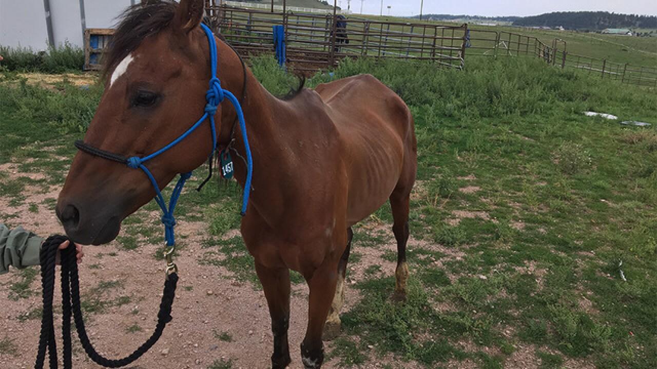 El Paso County: 7 horses seized, dead dogs found