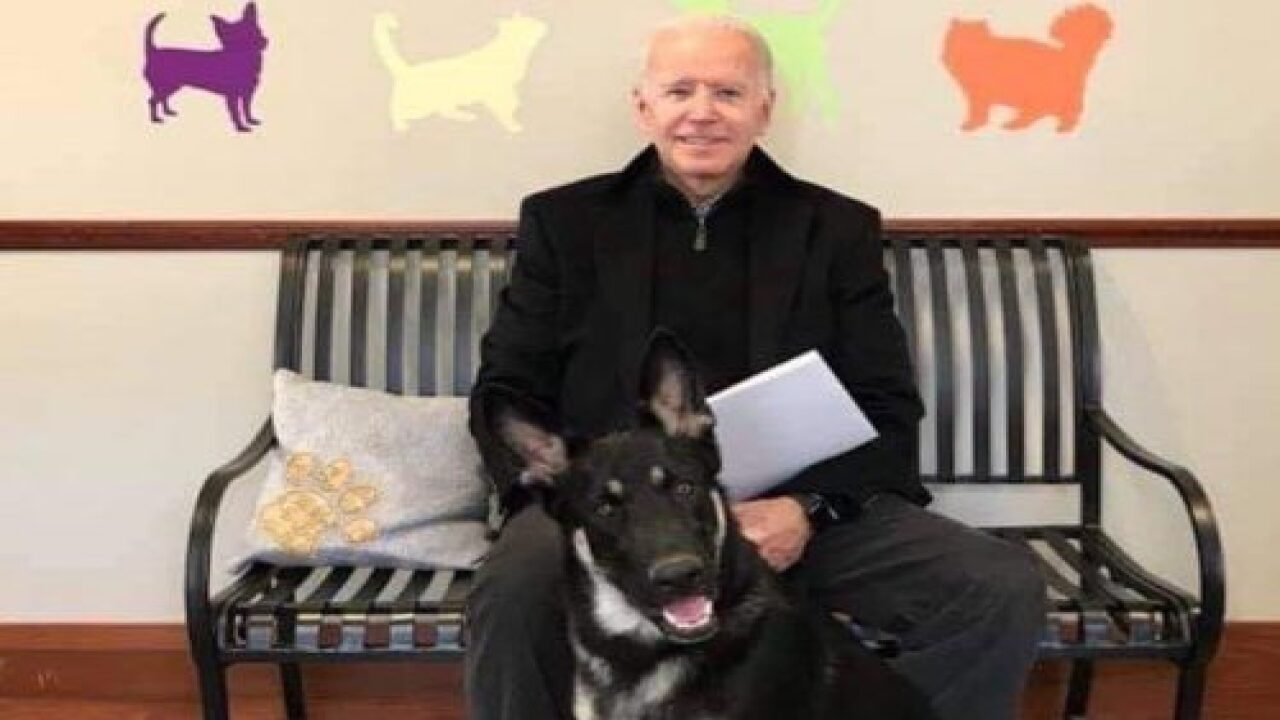 Biden Family's Dog Major Will Be First-ever Shelter Dog In The White House