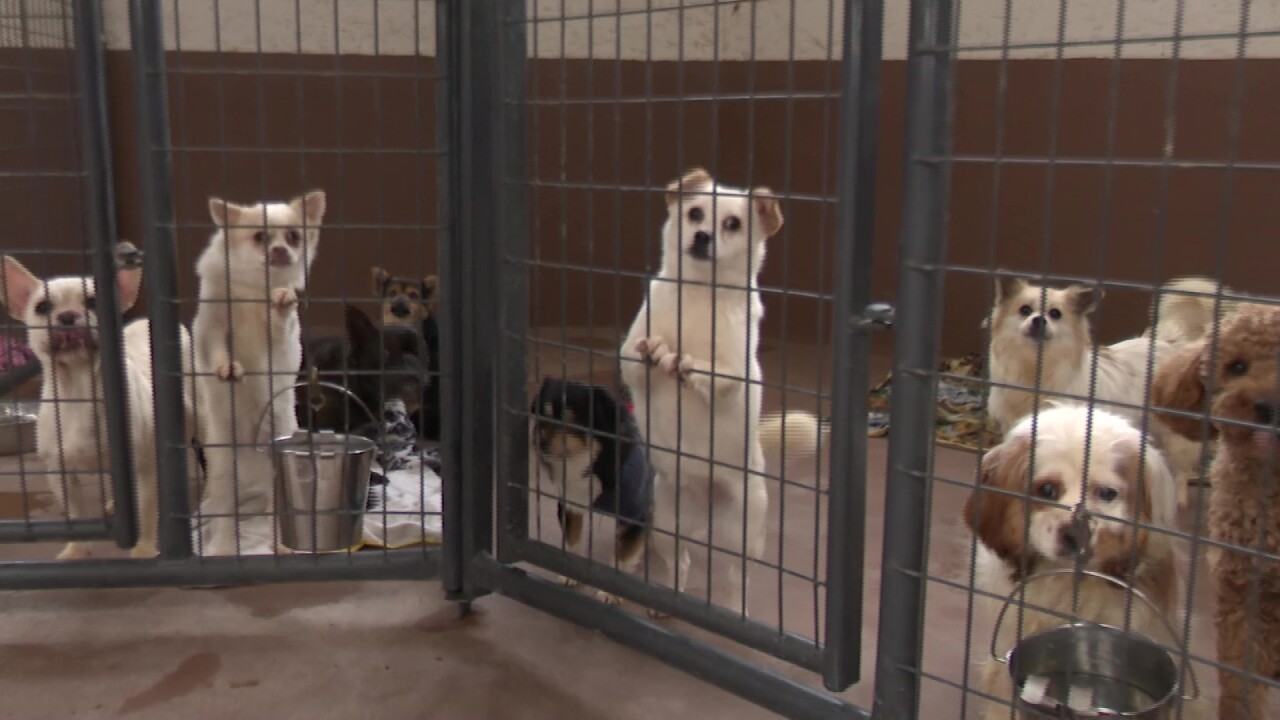 Dozens of dogs made a pit stop in Great Falls