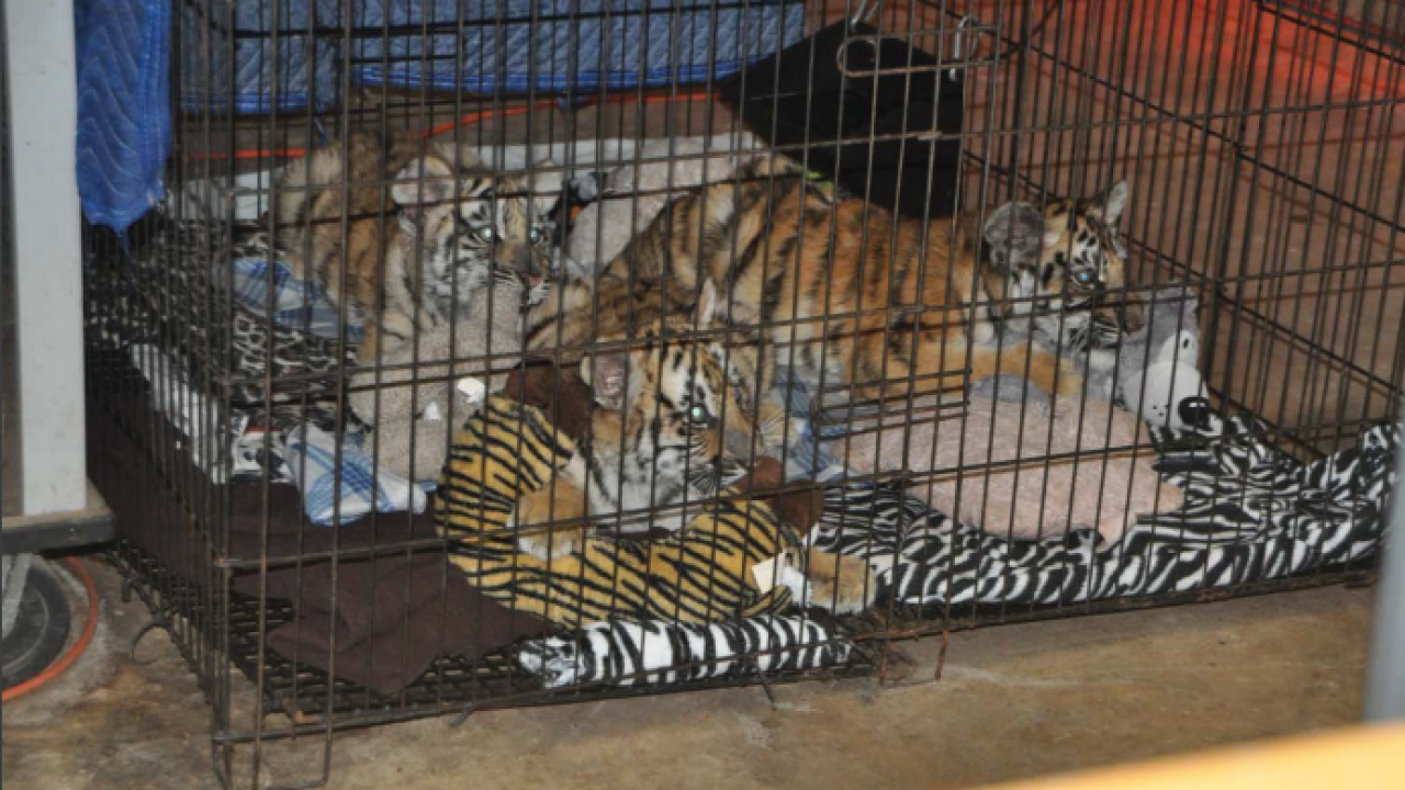 USA v. Jeff Lowe and Tiger King Park