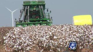 cotton farmers 0816.jpg
