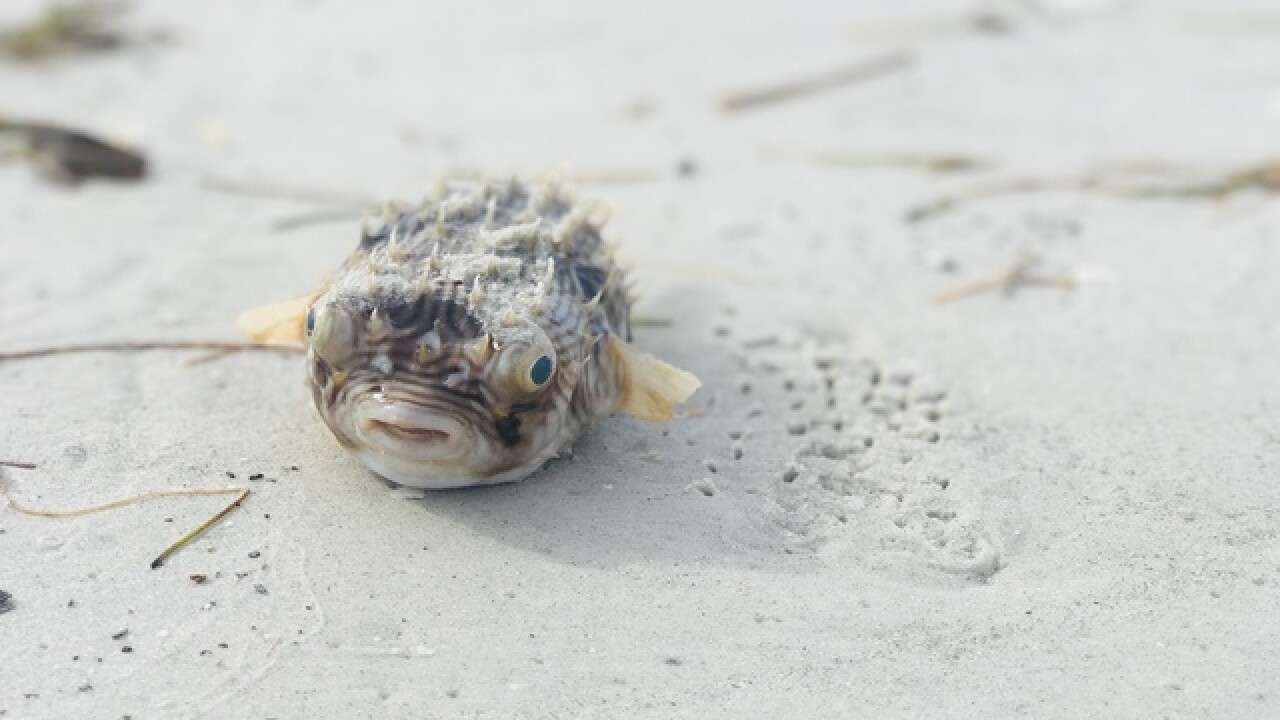 Red tide hits Pinellas County beaches