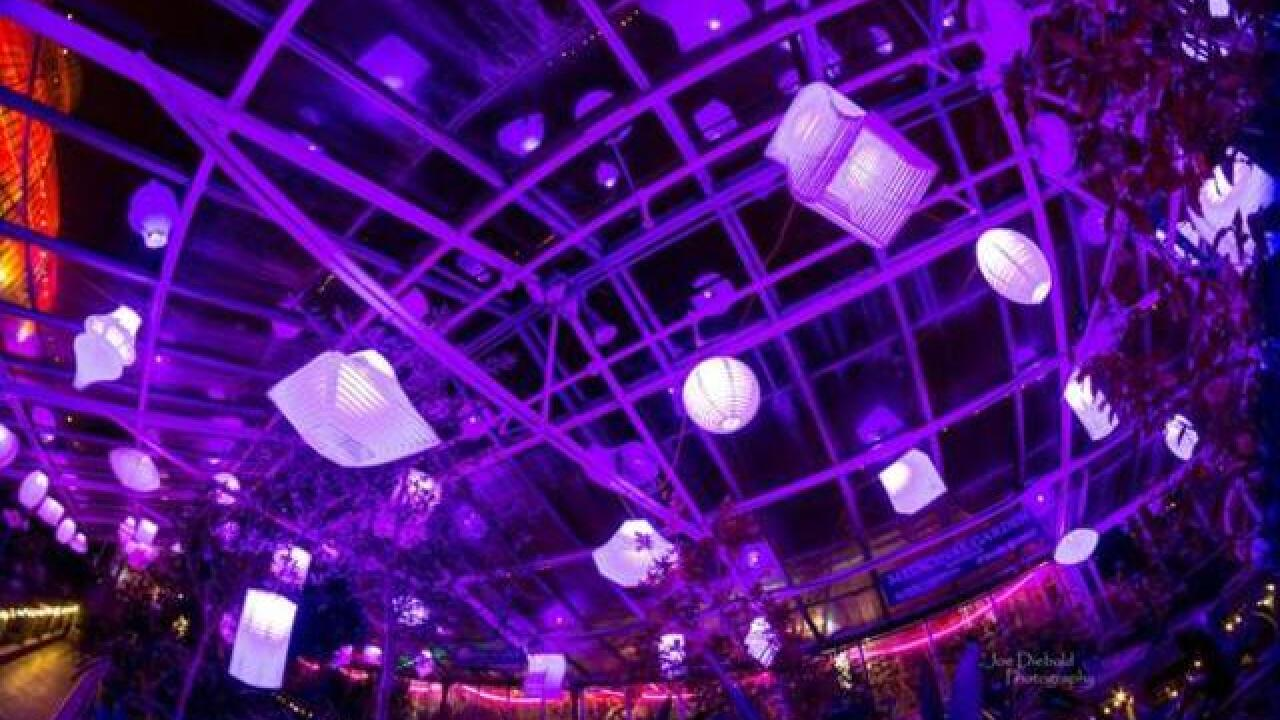 Lumagination 2018 lights up botanical gardens