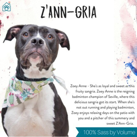 Photos: Wine labels featuring adoptable pets in Hamilton County for wine tasting event