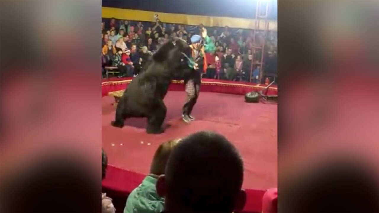 A circus bear attacked his handler in front of horrified families
