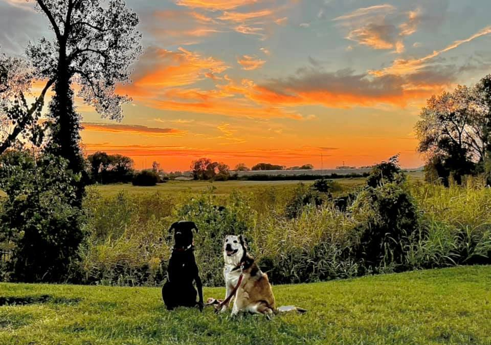 dogs sunset.jpg