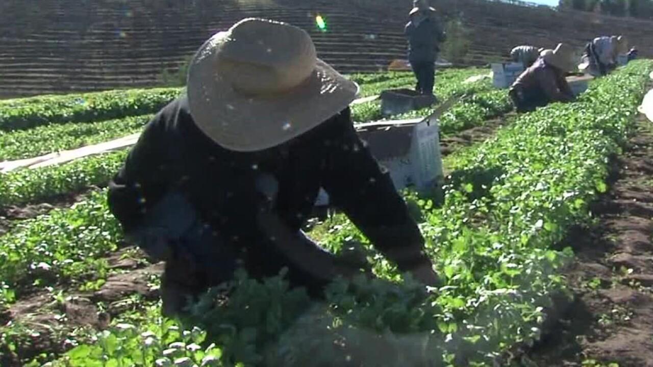 farmers_farming_labor.jpg