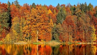 Fall foliage file image.