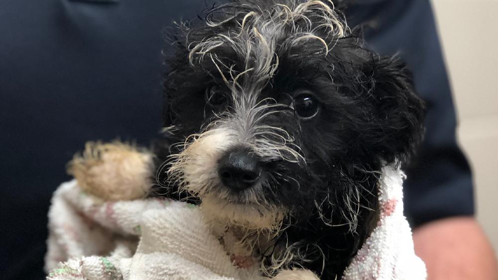 dog-adoption4.png