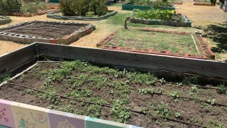 Gardening could be key to relieving COVID-19 stress