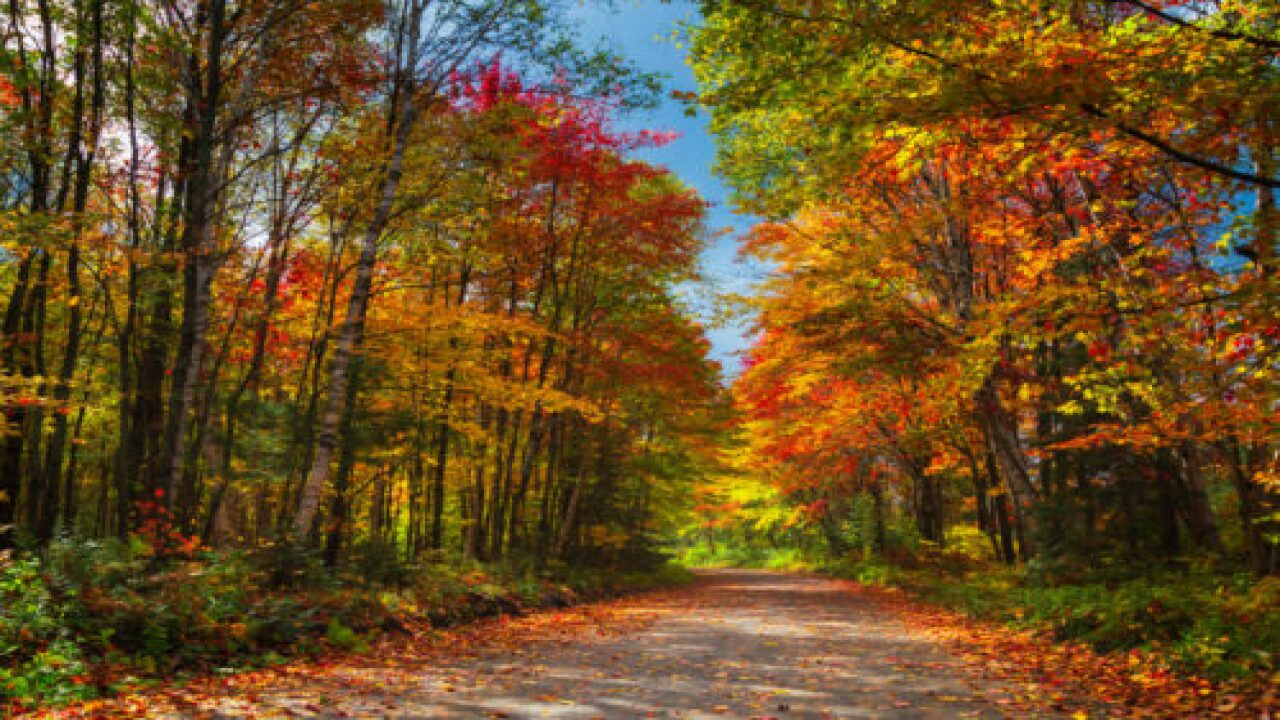 This Interactive Fall Foliage Map Shows The Best Days To See Colorful Leaves In Your Area