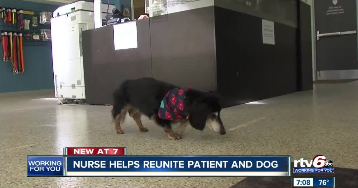 Nurse coincidentally reunites patient with lost dog after surgery