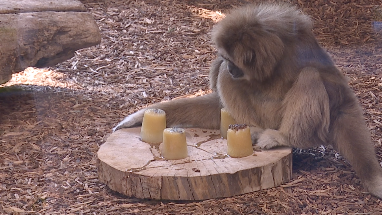 Zoo Boise monkey