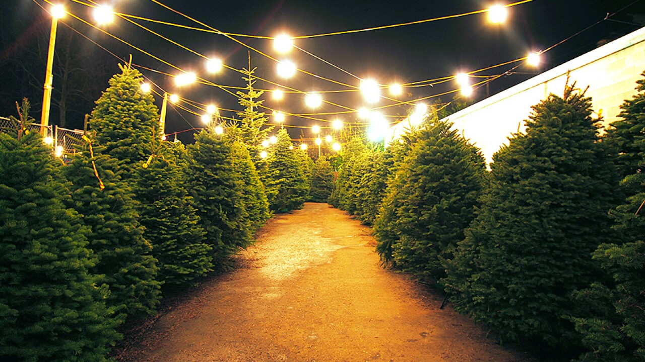 Picking the perfect Christmastree