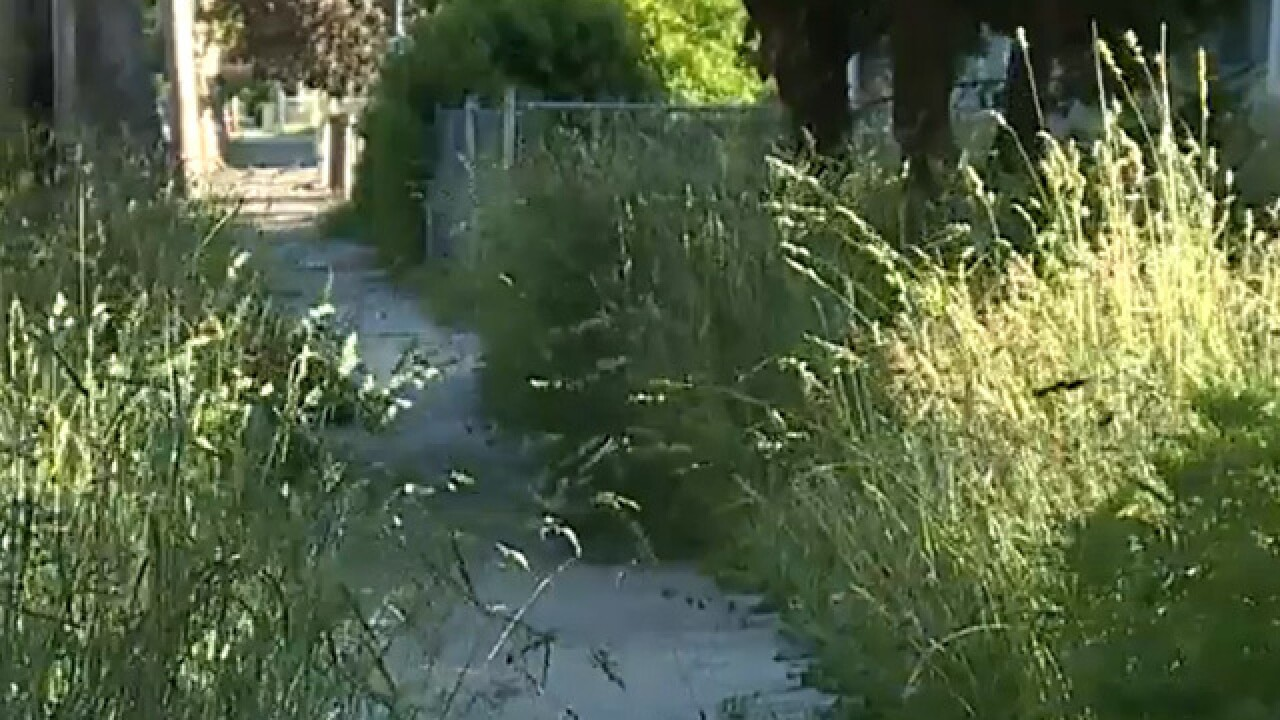 City struggles to keep up with overgrown grass