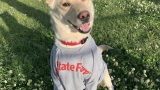 GMA Pet of the Week: Jake