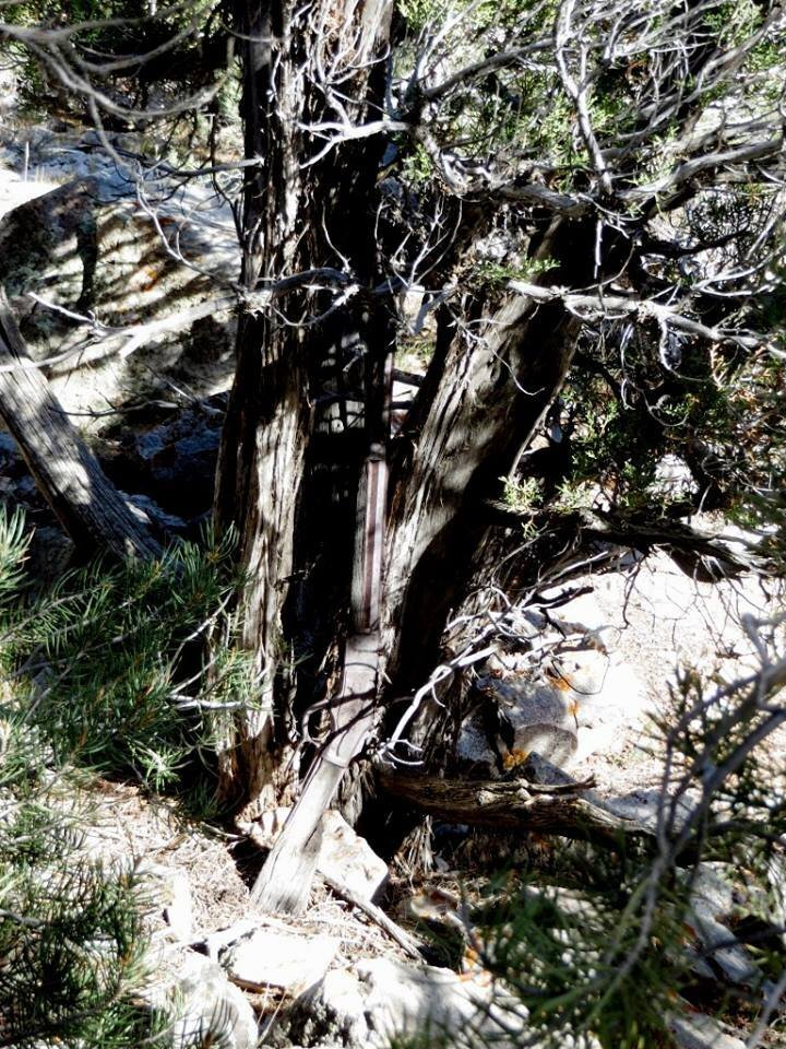 Photos: 132-year-old Winchester rifle found propped against tree in Nevadadesert