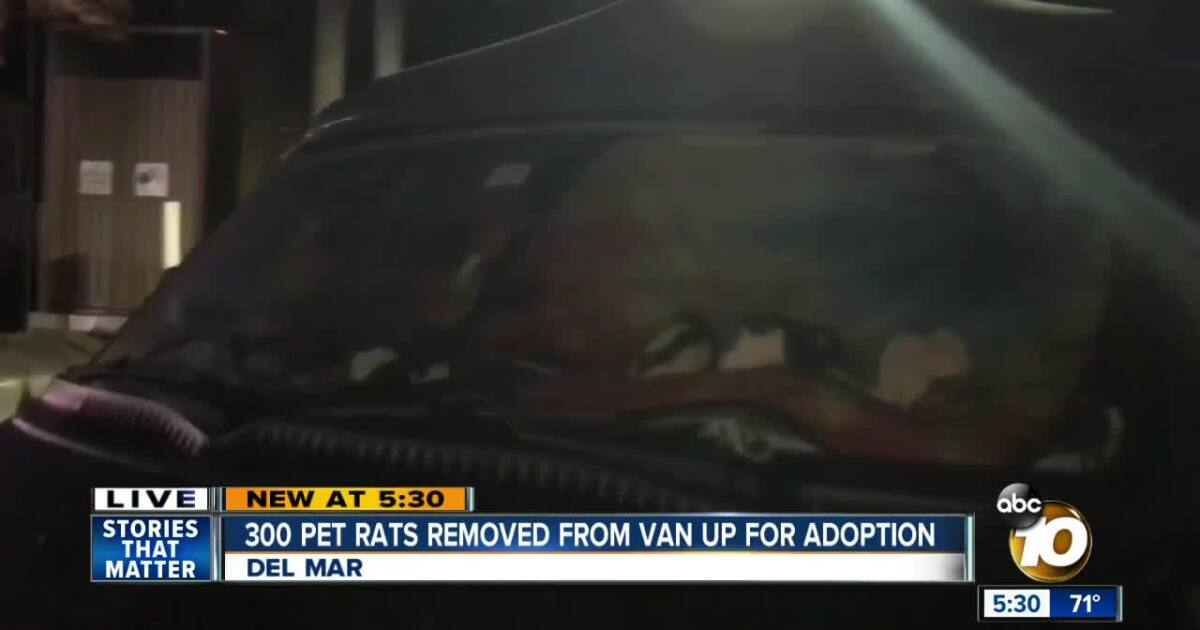Del Mar neighbors aid woman living in car with 300 pet rats