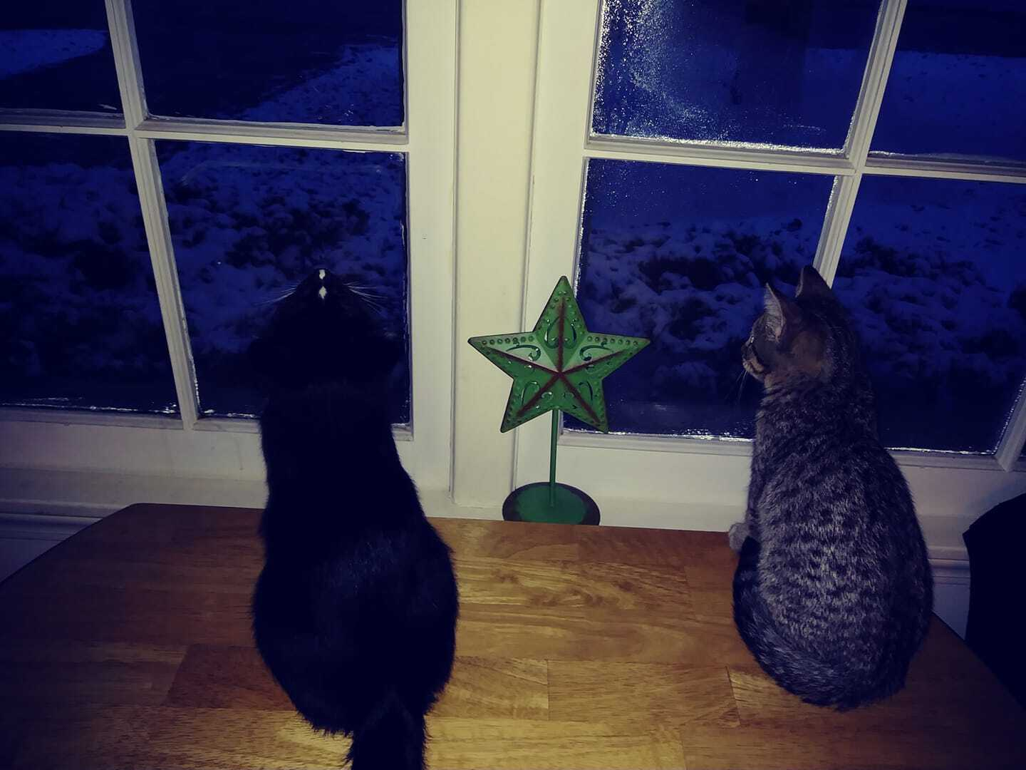 Cats with snow
