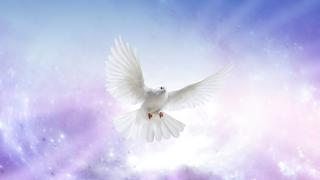 obituary dove.png