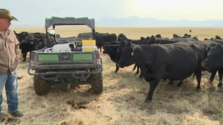 Montana Ag Network: demand for local beef has surged during pandemic