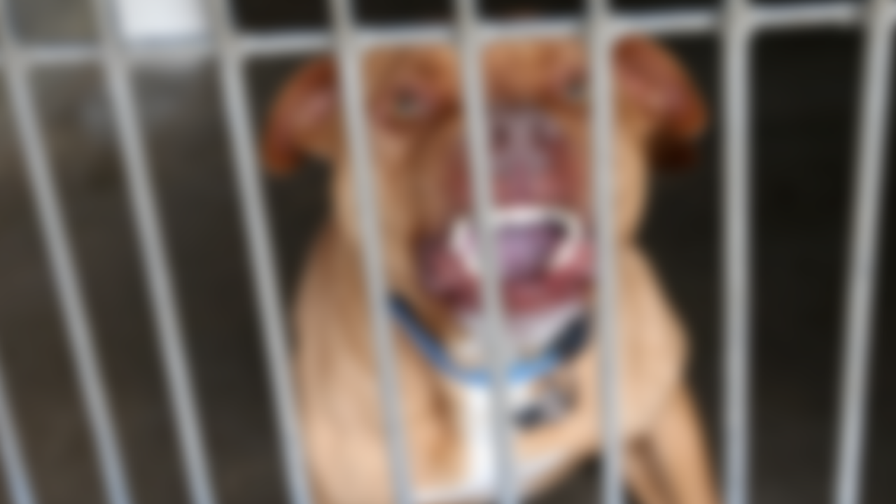 PIT-BULL-DOG-ATTACK-GENERIC-PITBULL-SHELTER-ABUSE-GENERIC.png