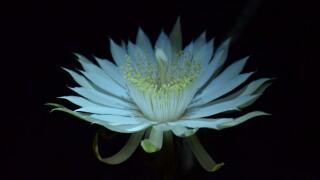 Bloom Night FY2013_25.JPG