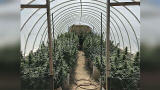 Las Animas County Illegal Marijuana Grow