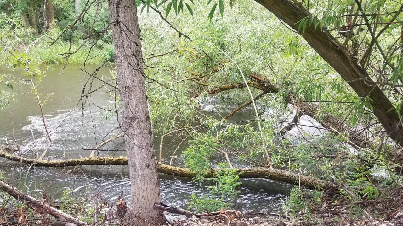 Trees in Boise River.jpg