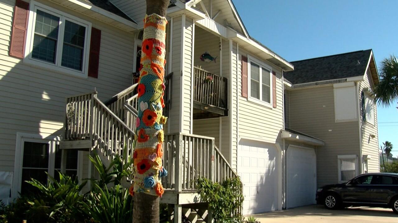 Yarn bomb tree.jpg
