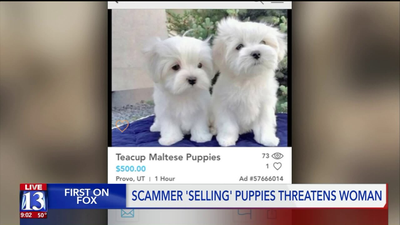 Utah woman receives death threat after confronting person 'selling' dogs online