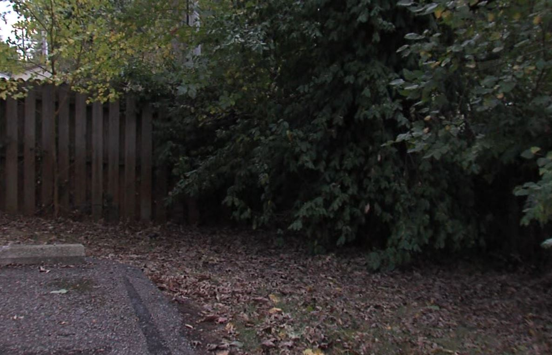 Baby Found in Treeline in Seymour.JPG