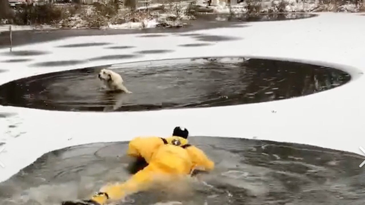 Firefighters rescue dog that fell through ice