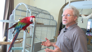 Couple launches parrot rescue from their GR home
