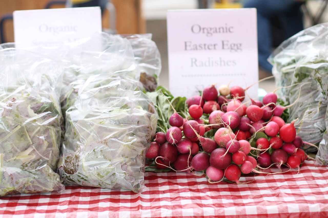 Organic easter egg radishes
