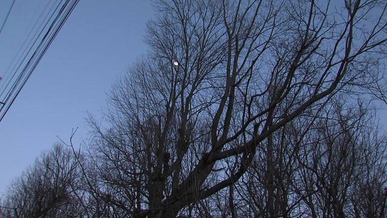 PICS: Crown Hill North Woods could be torn down