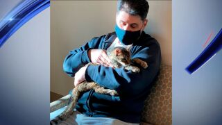 cat-owner-reunite.jpg