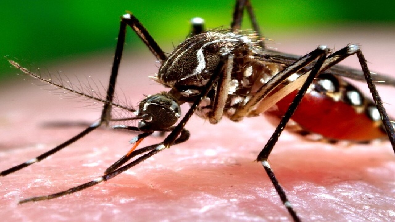 Watch out: 8 gross facts about mosquitoes