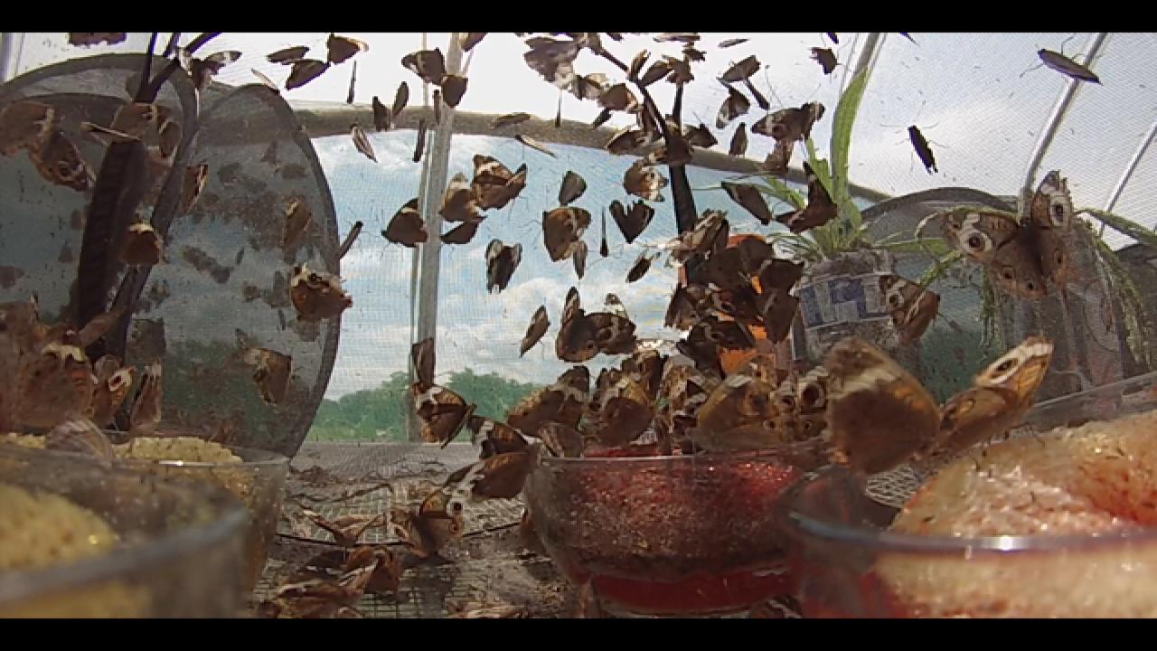 Euchee Butterfly Farm raises & sells butterflies