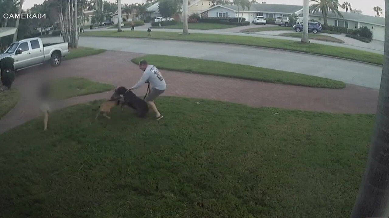Video captures dog attack in St  Petersburg, child tries to