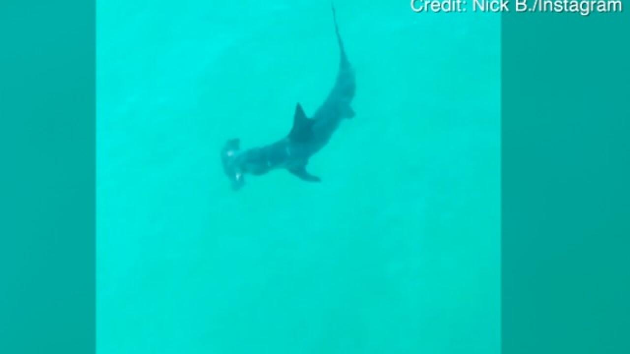 Shark sighting forces Oceanside shore closure