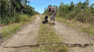 dog snakes.jpg