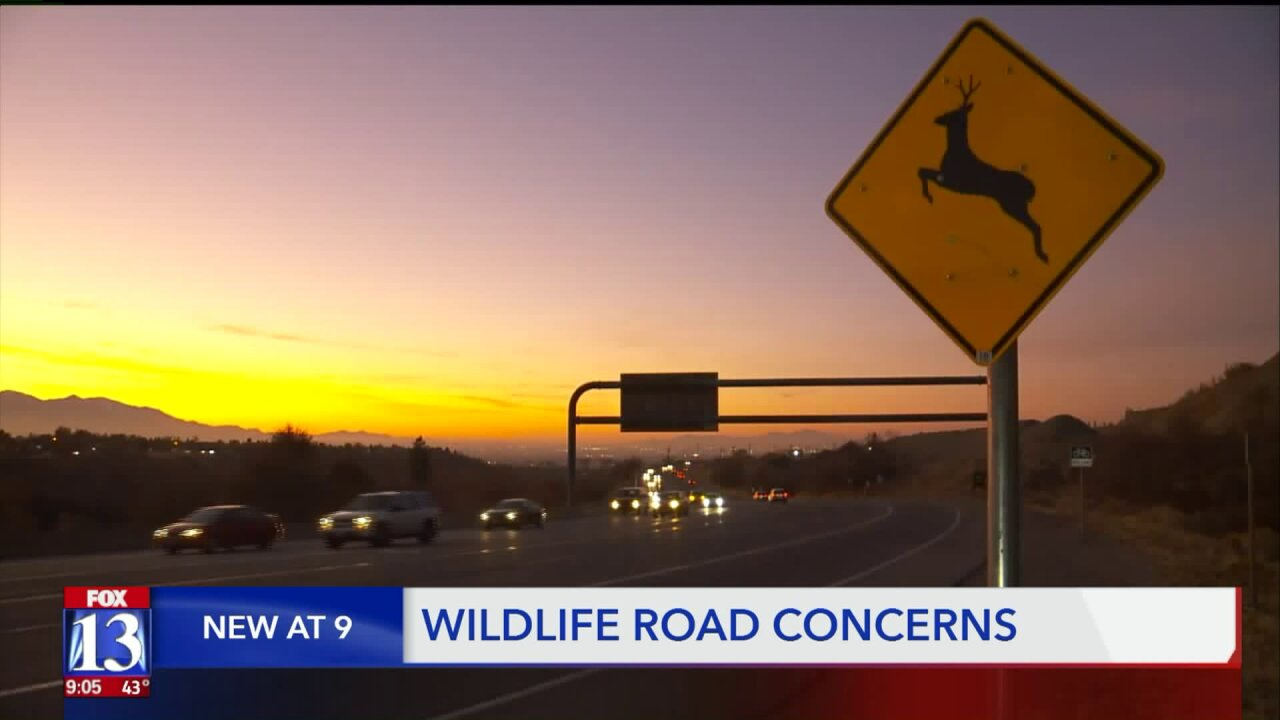 Utah drivers urged to 'be on high alert for wildlife'