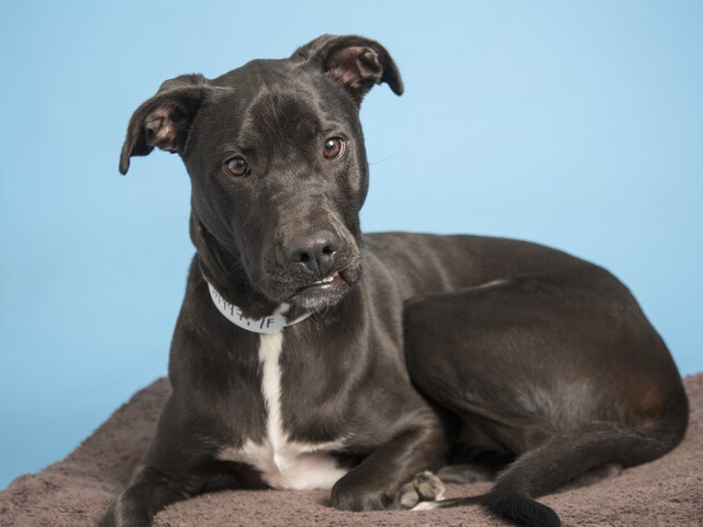 Pets available for adoption from Maricopa County Animal Care and Arizona Humane Society (1/10)