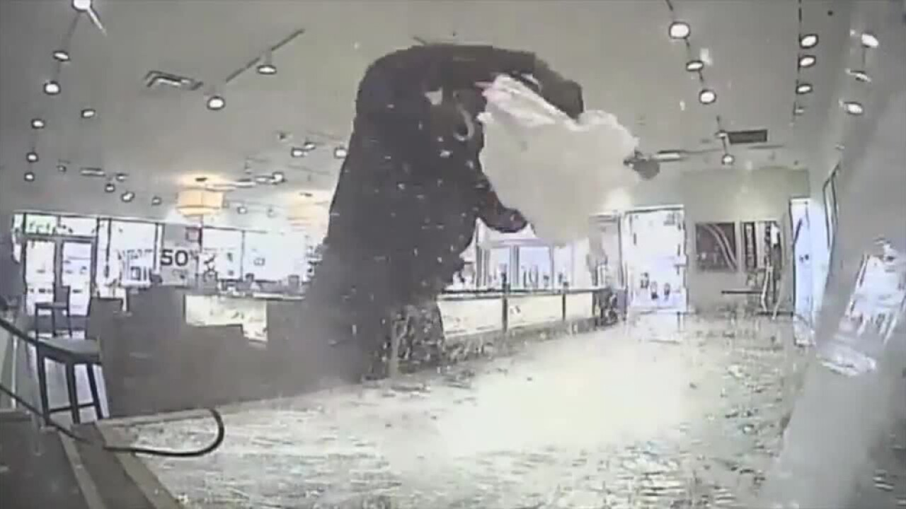 WPTV-PASCO-COUNTY-JEWELRY-STORE-SMASHED.jpg