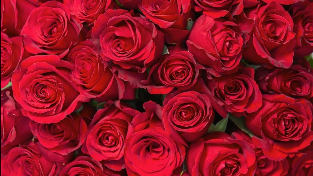 Amazon Prime members can get 2 dozen roses for $19.99