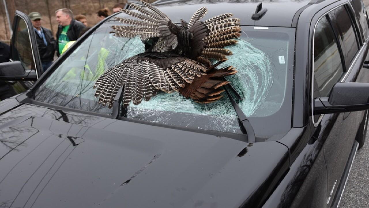 PHOTOS: Turkey flies into windshield in Indiana