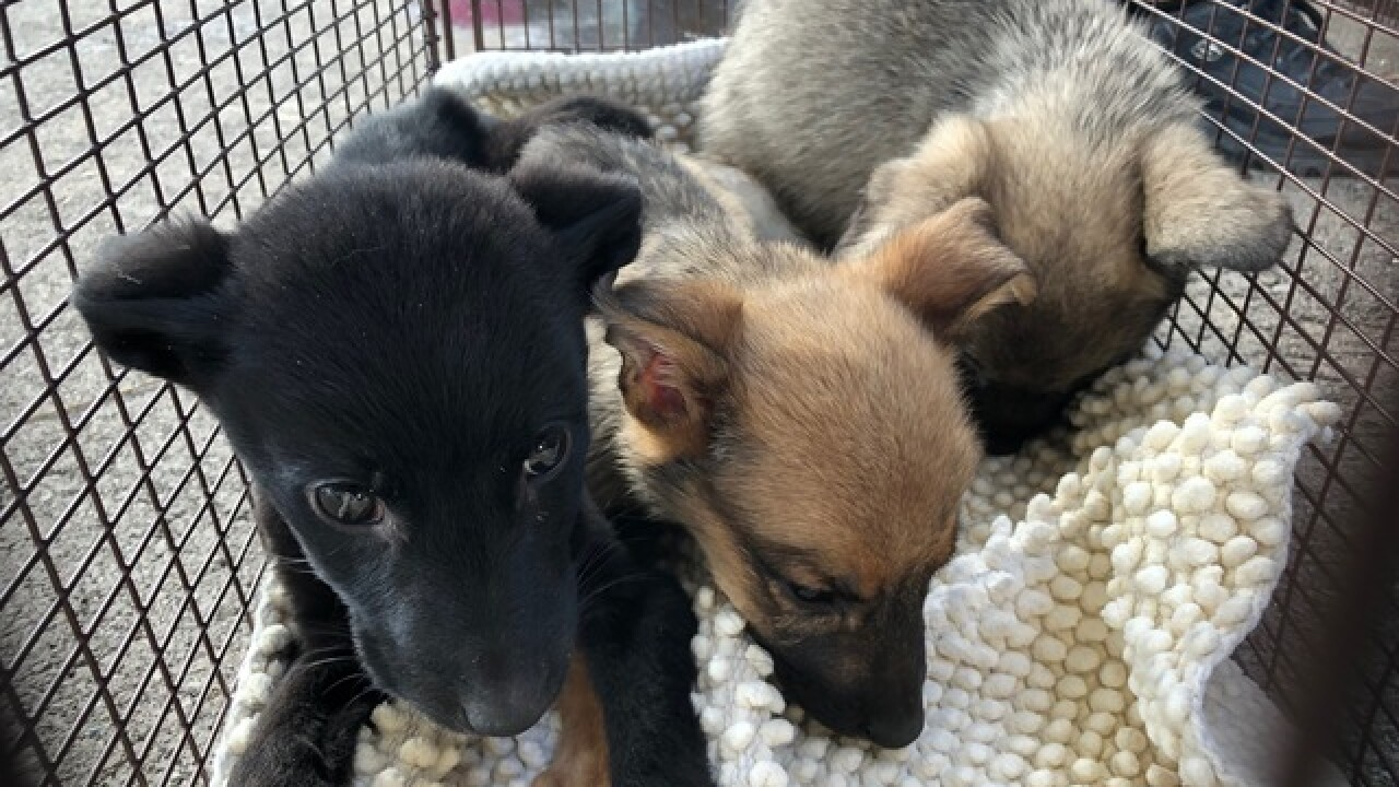 PACC takes in 15 dogs after owner was evicted