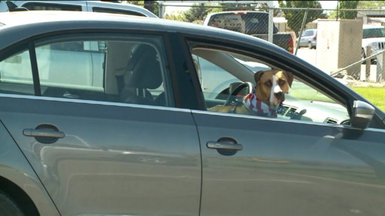 Animal advocates call for changes after dog dies in hot car in Salt Lake City